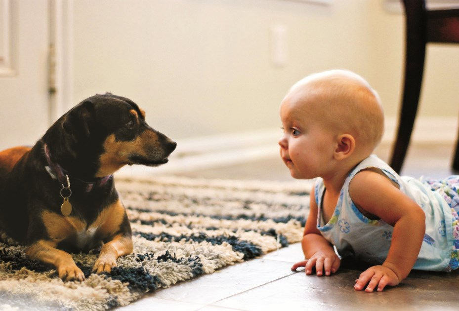 Baby boy on the floor staring at a dog